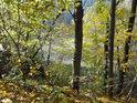 Divoká Orlice, přecházející v přehradu Pastviny je jen stěží vidět za podzimně zbarvenými buky.