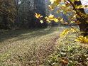 Úzká pravobřežní niva Divoké Orlice nad Zemskou bránou za podzimně zbarvenými javorovými listy.