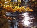 Řeka Divoká Orlice v úseku Niemojów - Klášterec nad Orlicí