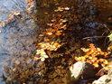 U břehu Divoké Orlice v dobách slunečného podzimu.