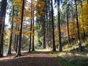 Podzimně zbarvená cesta po pravém břehu Divoké Orlice v dolní části chráněného území Zemská brána.