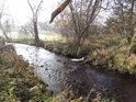 Krátký pravobřežní přítok Divoké Orlice přivádí vodu od Orlického Záhoří, pozorováno z levého polského břehu nedaleko obce Mostowice.