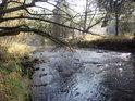 Divoká Orlice v místech pod soutokem s potokem zvaným Černá voda ve Sluncem zalitém podzimu.
