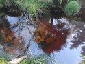 Nádherně hnědá slatinná barva v jedné tůňce na Divoké Orlice v její pramenné oblasti zvané Czarne Bagno.