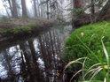 Poněkud hlubší úsek Divoké Orlice v pramenné oblasti se vyznačuje slatinnou barvou a sytou zelení pobřežního mechu.