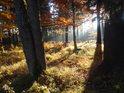 Podzim jako v pohádce, pramenná oblast Divoké Orlice, Czarne Bagno.