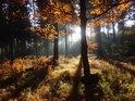 Slunce je kouzelník a to na podzim platí dvojnásob, pramenná oblast Divoké Orlice, Czarne Bagno.