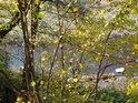 Za podzimním listím je vidět koryto Divoké Orlice na konci vzedmutí Pastvinské přehrady.