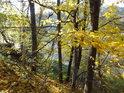 Javory zpevňují svah, levý břeh Divoké Orlice na konci vzedmutí Pastvinské přehrady.
