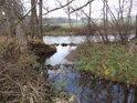 Horecký potok posiluje Divokou Orlici mezi Žamberkem a Záchlumím.
