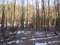 Malý lužní les v sousedství lesa běžného na pravém břehu Divoké Orlice pod Liticemi nad Orlicí.