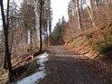 Lesní cesta na pravém břehu Divoké Orlice mezi obcemi Litice nad Orlicí a Sopotnice v místě stoupání.