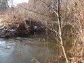Soutok Divoké Orlice a potoka Rybná je obrostlý vrbami.